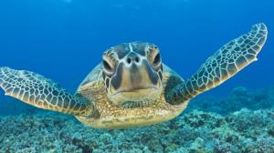 sea-turtle-for-pc-120104