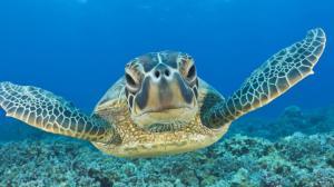sea-turtle-for-pc-120104