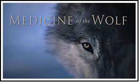 wolf_photo